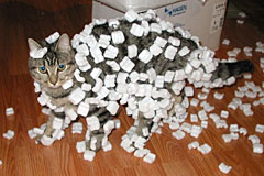 Cat with styrofoam